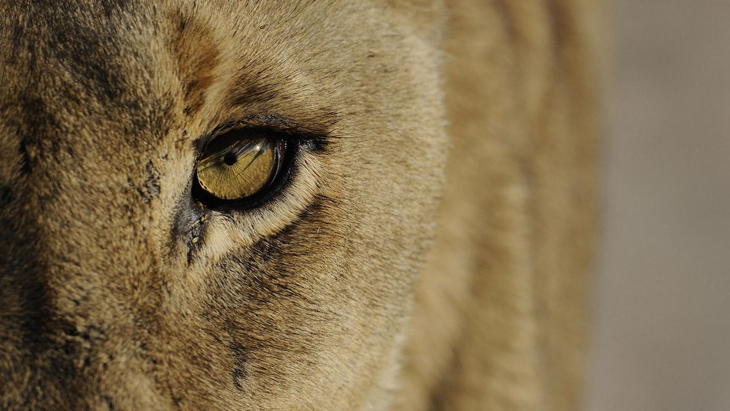 Impressions de Voyage de Nicole et ses amis – Safari Auto Tour Namibie, Novembre 2016