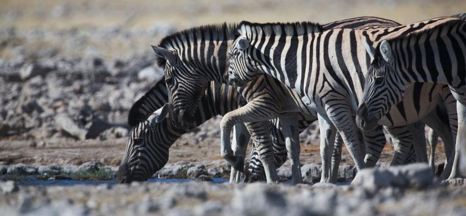 Impressions de Voyage de Marie et Aurelien – Safari Auto Tour Namibie, Mars 2016