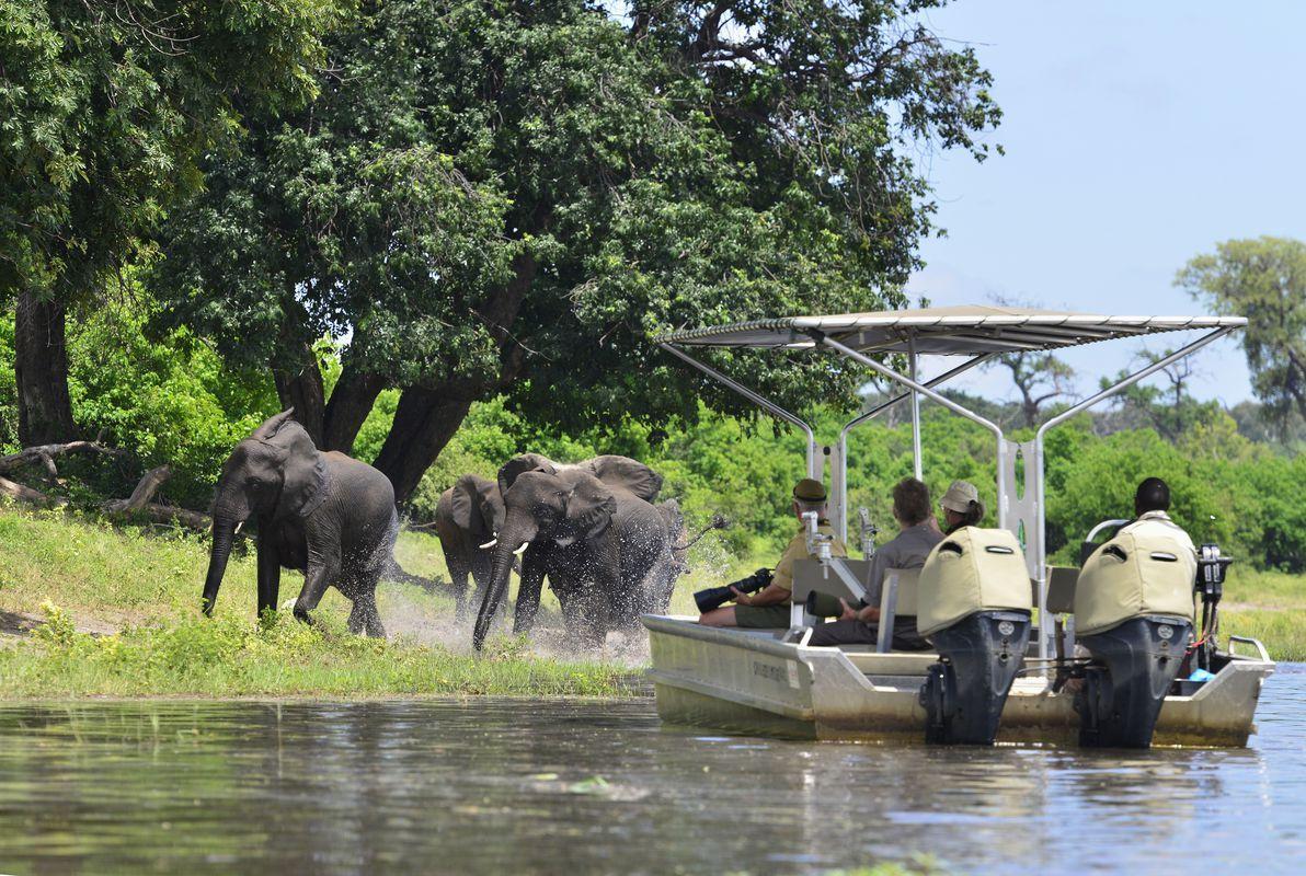 Impressions de voyage de Sylvie & Georges, Safari guidé, Botswana, Juin 2018