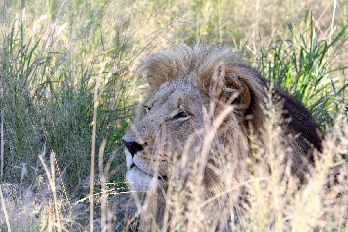 Impressions de voyage d'Olivier et sa famille, Auto tour Namibie-Botswana-Zimbabwe, Juillet 2018