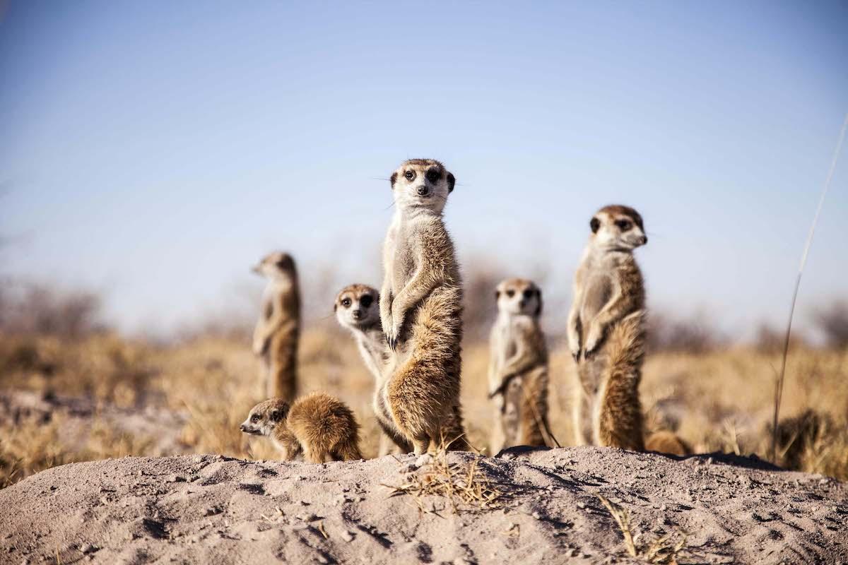 Impressions de voyage de Flora & sa famille, Auto-tour Namibie – Octobre 2019