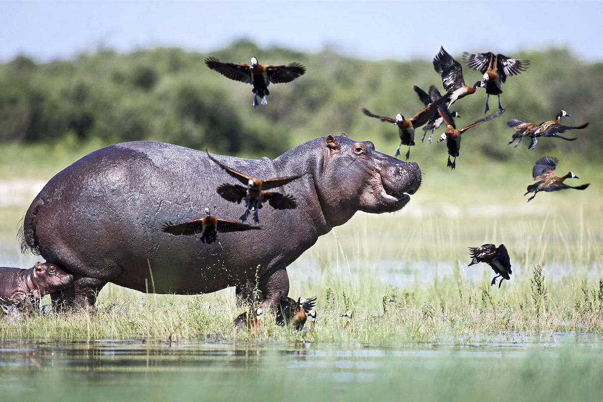 Impressions de voyage Florent, Fly-in Safari, Botswana, Juin 2018