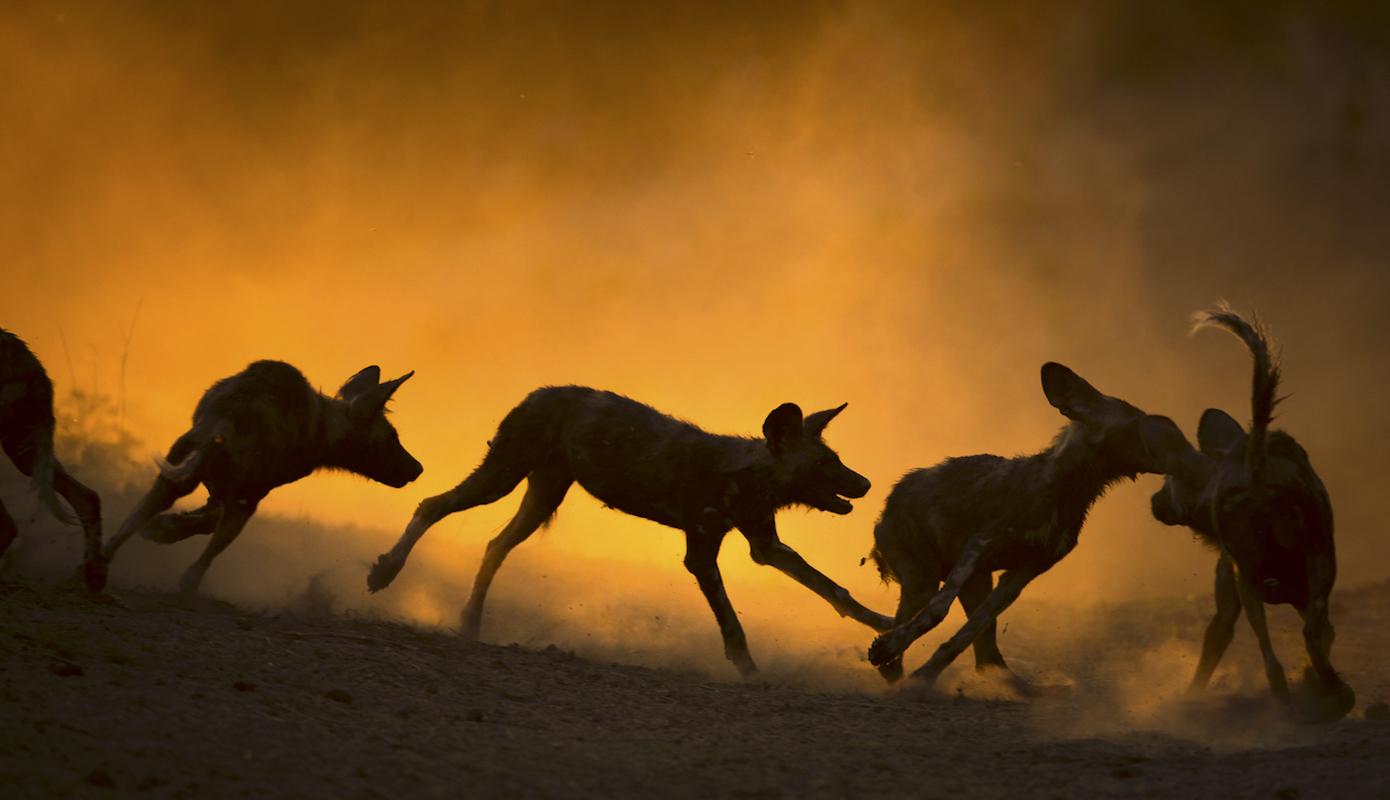 Impressions de voyage de Bertrand & Daniel, Safari guidé, Botswana, Juin 2018
