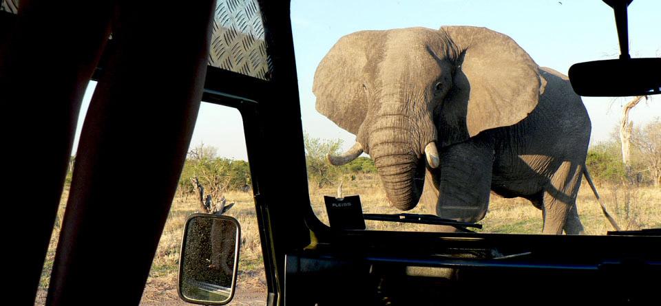 Impressions de voyage de Joël & ses amis, Tour guidé  Namibie, Fév. 2019