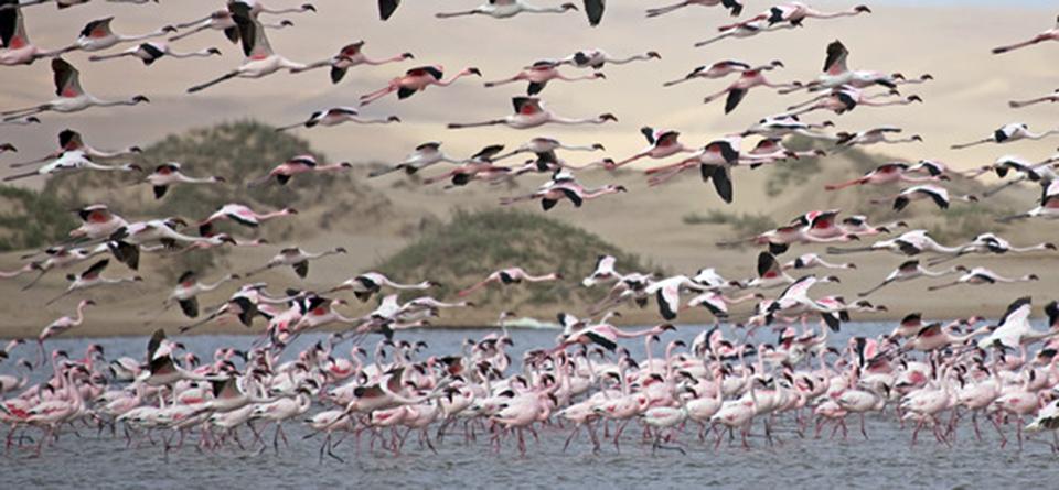 Impressions de voyage de Frédérique & Raphaël, Auto-tour Namibie – Septembre 2019