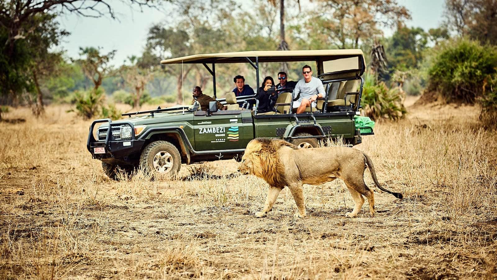 Impressions de voyage de Francis & ses amis, Fly-in Botswana, Zimbabwe – Septembre 2019