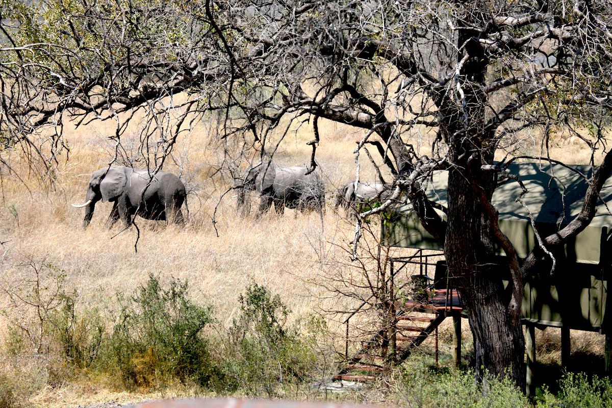 Impressions de voyage de Brigitte & ses amis, Auto-tour Namibie, Botswana, Zimbabwe – Septembre 2019