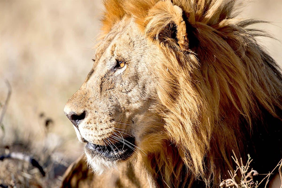 Impressions de voyage de Jean Charles & ses amis, Auto tour Namibie – Novembre 2019