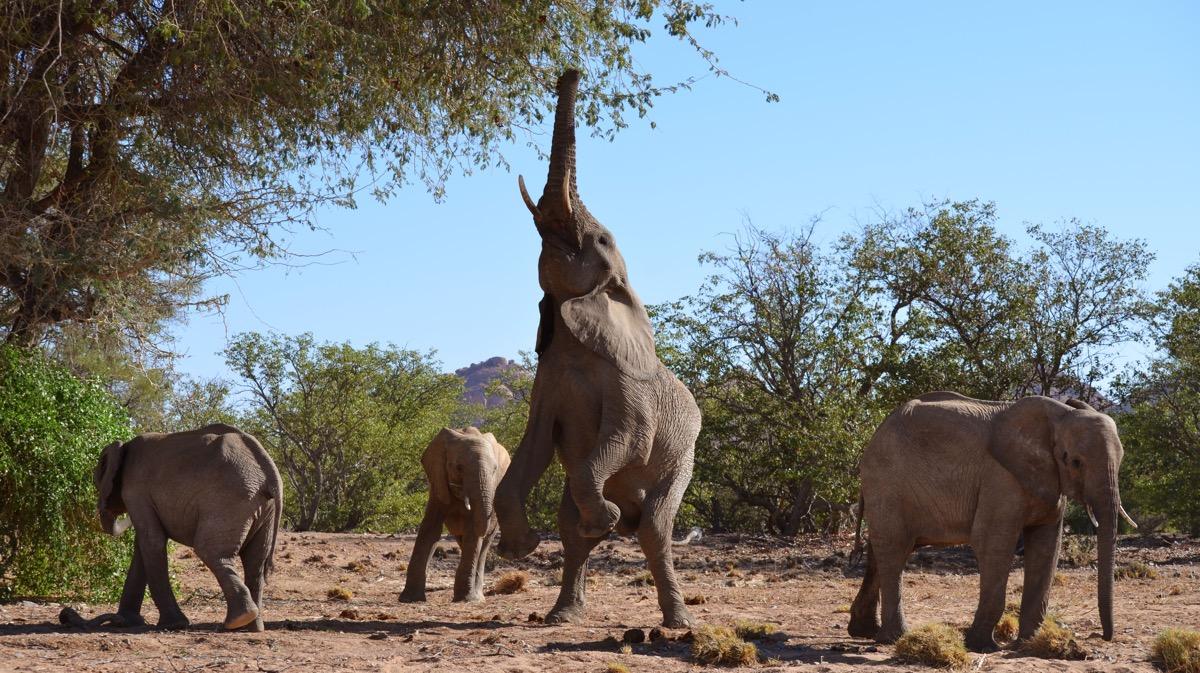 Impressions de voyage de Caroline et sa famille, Auto tour lodges et partie guidée sous toile – Namibie, Juillet 2018